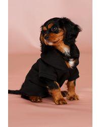 MissPap Dog Hoodie - Black