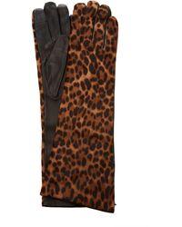 Maison Fabre Leopard-print Calf-hair Gloves - Multicolour