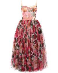 Dolce & Gabbana Camellia-print Tulle Bustier Midi Dress - Multicolour