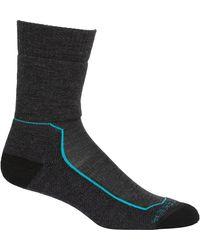 Icebreaker Hike+ Medium Crew Sock - Blue
