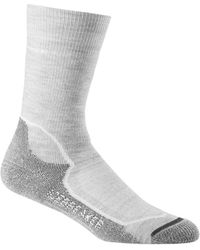 Icebreaker Hike+ Medium Crew Socks - Gray