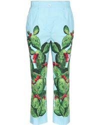 Dolce & Gabbana Exclusivos de mytheresa.com: pantalones de algodón estampado
