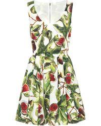 Dolce & Gabbana - Fig Cotton Poplin Minidress - Lyst