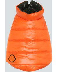 Moncler Exclusivo en Mytheresa - chaleco de plumas para perro - Naranja