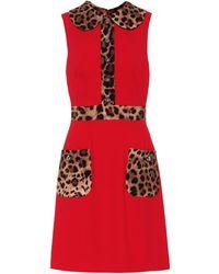 Dolce & Gabbana Leopard-print Trim Flared Dress