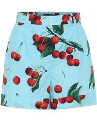 Dolce & Gabbana Esclusiva per Mytheresa - Shorts a stampa in cotone - Blu