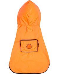Moncler Genius X Poldo chaleco para perro - Naranja