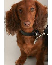 NA-KD Hanger Met Honden Halsband - Metallic