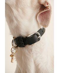 NA-KD Accessories Hanger Met Honden Halsband - Metallic