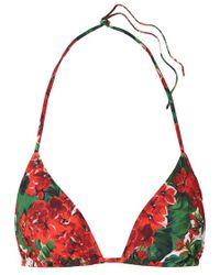 Dolce & Gabbana Triangel-bikini-oberteil Mit Blumenprint - Rot