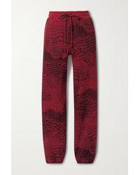 TWENTY MONTREAL Caiman Hyper Reality Jogginghose Aus Jacquard-strick Aus Einer Baumwollmischung - Rot