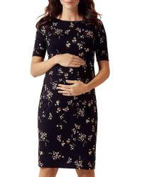 TIFFANY ROSE - Anna Maternity Shift Dress - Lyst