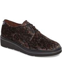Hispanitas Richelle Oxford Sneaker - Brown