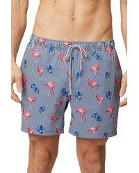 Rainforest Wading Flamingo Stretch Swim Trunks - Blue