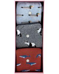 Alfredo Gonzales Mehrfarbige/bunte Socken Animals Box