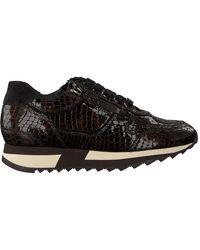 HASSIA Bruine Lage Sneakers Madrid