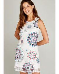 Apricot - Etuikleid »Lace Shift Dress Print« in bedruckter Spitze - Lyst