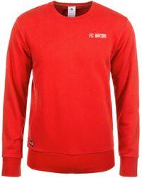 adidas Originals Sweatshirt Fc Bayern München Graphic - Rood