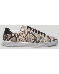 Palm Angels Python Tennis Sneakers - ブラウン