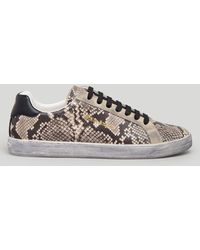 Palm Angels Python Sneakers - ブラウン