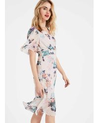 Phase Eight Keely Floral Dress - Multicolour