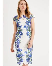 Phase Eight Kyra Floral Lace Dress - Blue