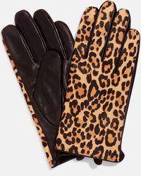 Phase Eight Liz Leopard Print Glove - Multicolour