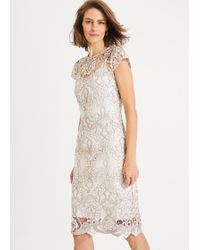 Phase Eight Frances Lace Dress - Multicolour
