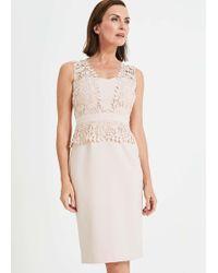 Phase Eight Harmony Lace Dress - Multicolour
