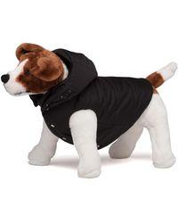 Prada Nylon Puffer Dog Coat With Hood - Black