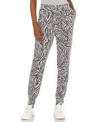 1.STATE Chic Zebra ジョガー - グレー