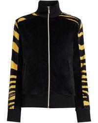 Roberto Cavalli Vintage Zebra Stripe Track Jacket - Black