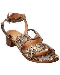 Seychelles Exhilarating Snake-embossed Leather Sandal - Brown
