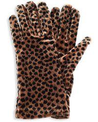 Portolano Women's Velvet Cheetah-print Gloves - Brown Black - Multicolour