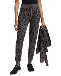 Chrldr Big Leopard Joggers - Black