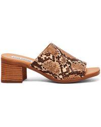 Steve Madden Alessia Snake-print Mule Sandals - Brown