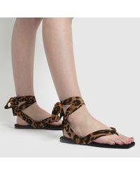 Schuh Black & Brown Tazia Square Toe Tie Flat Shoes