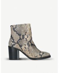 Steve Madden Tenley Ankle Boots - Multicolour