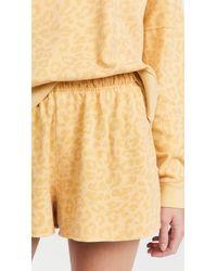 Honeydew Intimates Beach Bum Terry Lounge Shorts - Multicolour