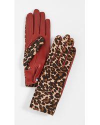 Agnelle Chloe Panthere Gloves - Multicolour