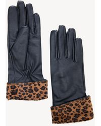 Sole Society Genuine Leather Gloves W/ Leopard - Blue