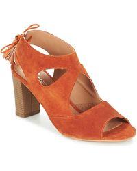 Betty London GARMER - Arancione