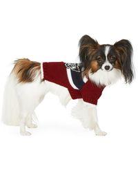 DSquared² Poldo Dog Couture Edition レッド スモール Quebec セーター - マルチカラー
