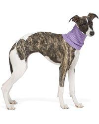 Giu Giu Purple Nonna Turtleneck Dog Collar - Multicolour