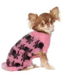 Ashley Williams ピンク & ブラック インタルシア ドッグ セーター