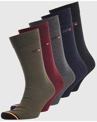 Superdry 5 Pack Socks - Multicolour