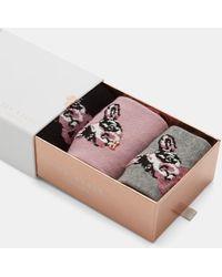 Ted Baker Cotton Bulldog Sock Set - Multicolour