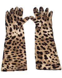 Dolce & Gabbana Brown Leopard Print Wool Long Gloves