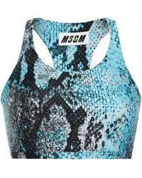MSGM Snake-print Stretch Sports Bra Animal Print - Blue