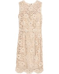Dolce & Gabbana - Cotton Guipure Lace Dress - Lyst